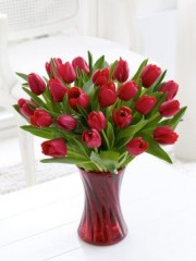 Red Tulip Vase with White Wine