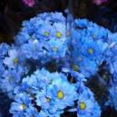 Why Buy Autumn Flowers from Westhill Florists