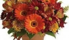 Buy Autumn Flowers Westhill For Your Garden