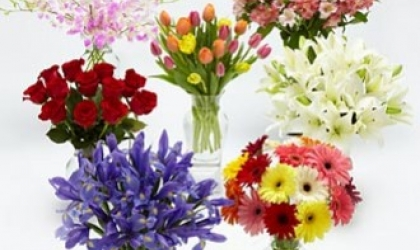 Beautiful Summer Flowers for All Special Occasions