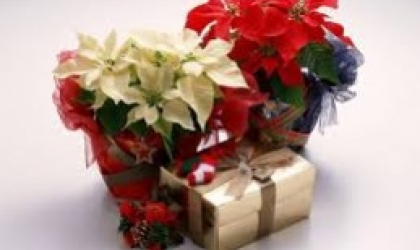 Choose Beautiful Winter Flowers From The Best Florists Westhill